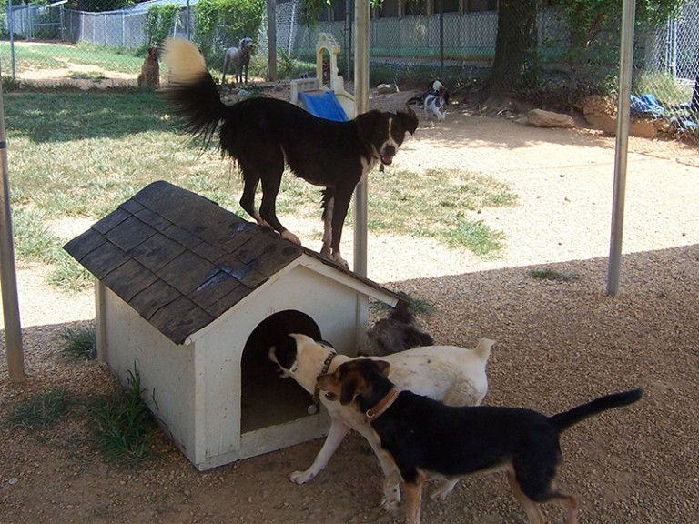 Sunny Acres Dog Boarding